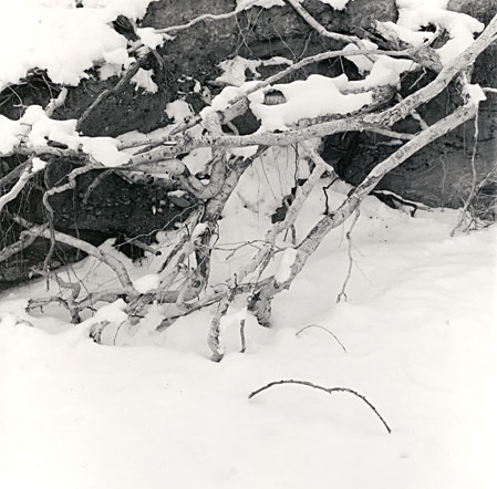 snow and tree roots in  an arroyo